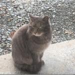 猫の写真はこう撮る!プロ直伝の撮り方の極意3選!