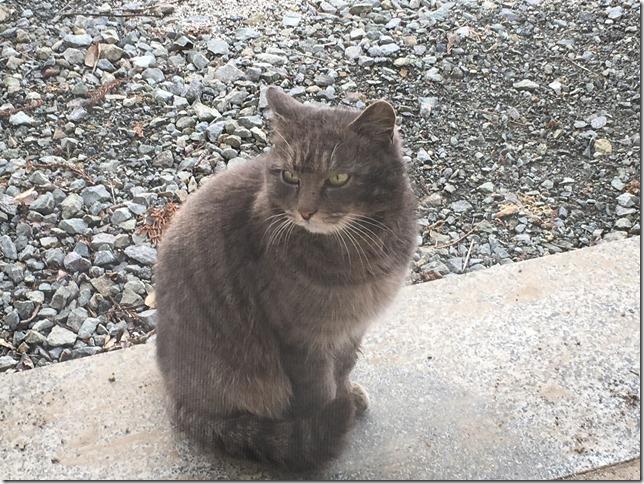 猫写真の撮り方のコツ!解説画像